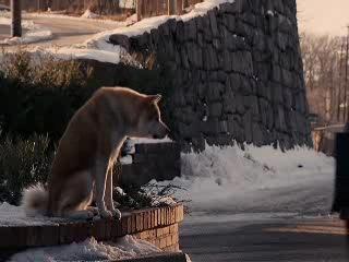 Оч люблю фильм Хатико.  Настоящая,искренняя история о собачей вернсоти.  Вот его краткое